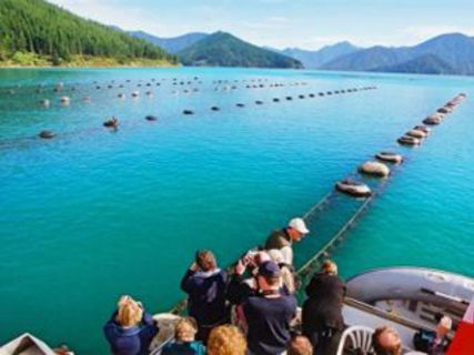 Greenshell Mussel Cruise - Marlborough Travel