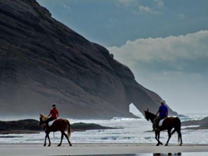 Cape Farewell Horse Treks