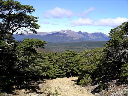Mt Arthur (1 795m)
