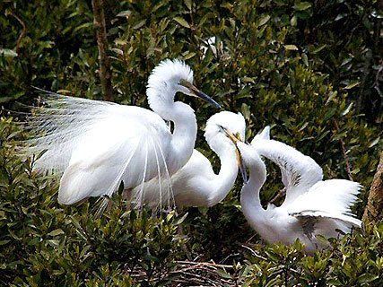 White Heron Sanctuary Tour