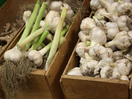 Taste Nature Organic Shop