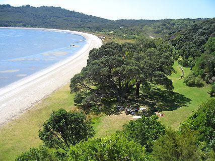 Whakanewha Regional Park walks