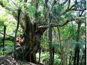 Sir Edmund Hillary Trail