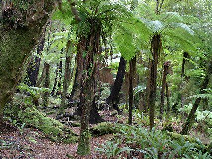 Talbot Forest