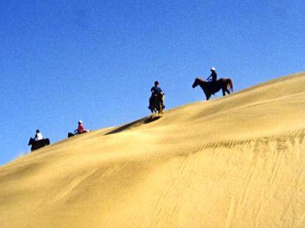 South Kaipara Horse Trek