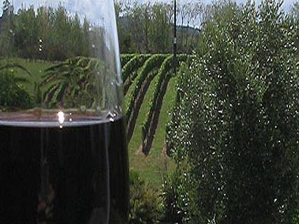 Fine Wine & Food Tours