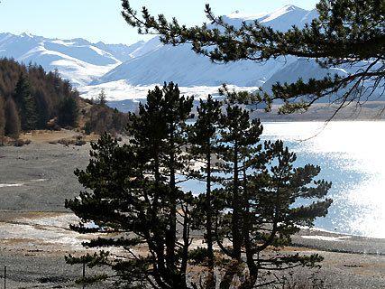 Lake Tekapo Walkway