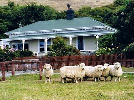 Sheep Shearing Show