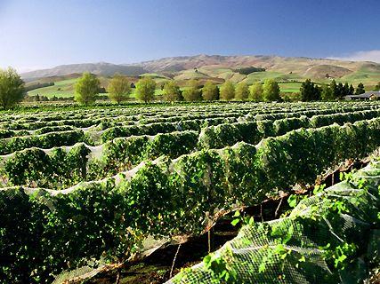 Vignobles du Waipara