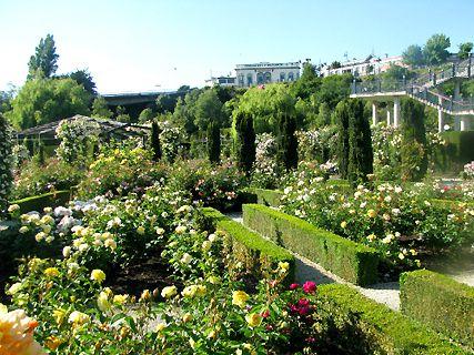 Trevor Griffiths Rose Garden