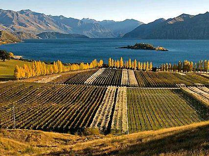 Vignobles du Central Otago