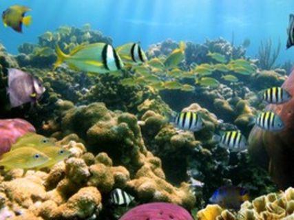 Les Jardins de la Mer