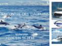 EVENT SEA - A la rencontre des dauphins