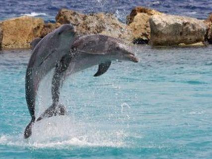 Océan Safari
