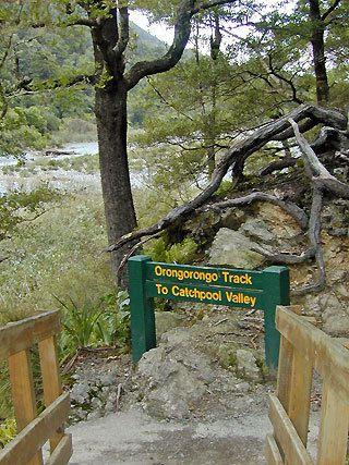 Orongorongo Track