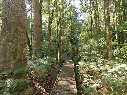 Trounson Kauri Park DOC Campsite