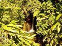 Cascade de la Ravine Baron / Absalon