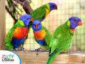 Zoo de la Martinique