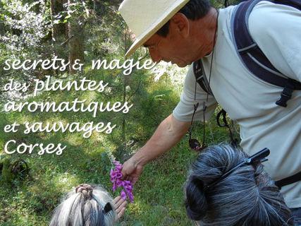Percez les secrets des plantes sauvages