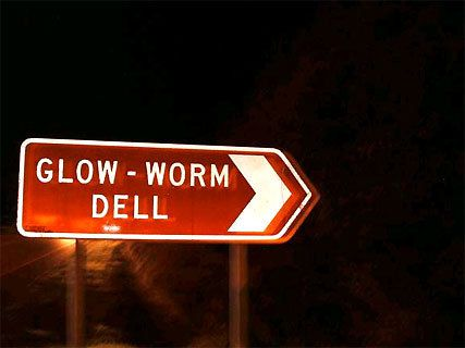 Glow worm dell