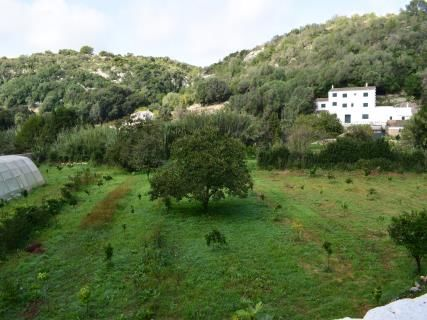 Visita guiada al Barranco de Algendar